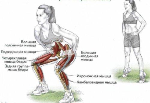 Схематичное изображение женщины, которая выполняет упражнение приседание